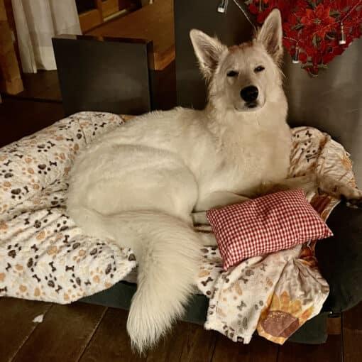 Zirbenkissen für stressgeplagte Hunde